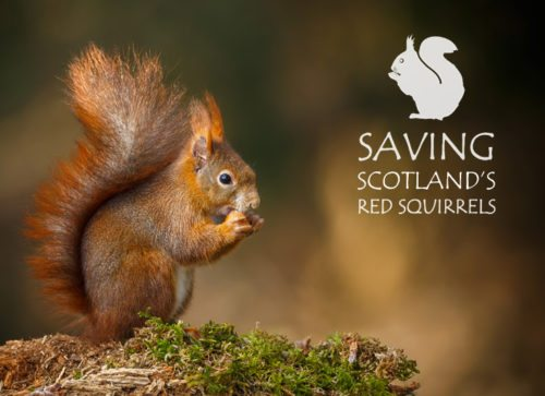 Saving Scotland's Red Squirrels